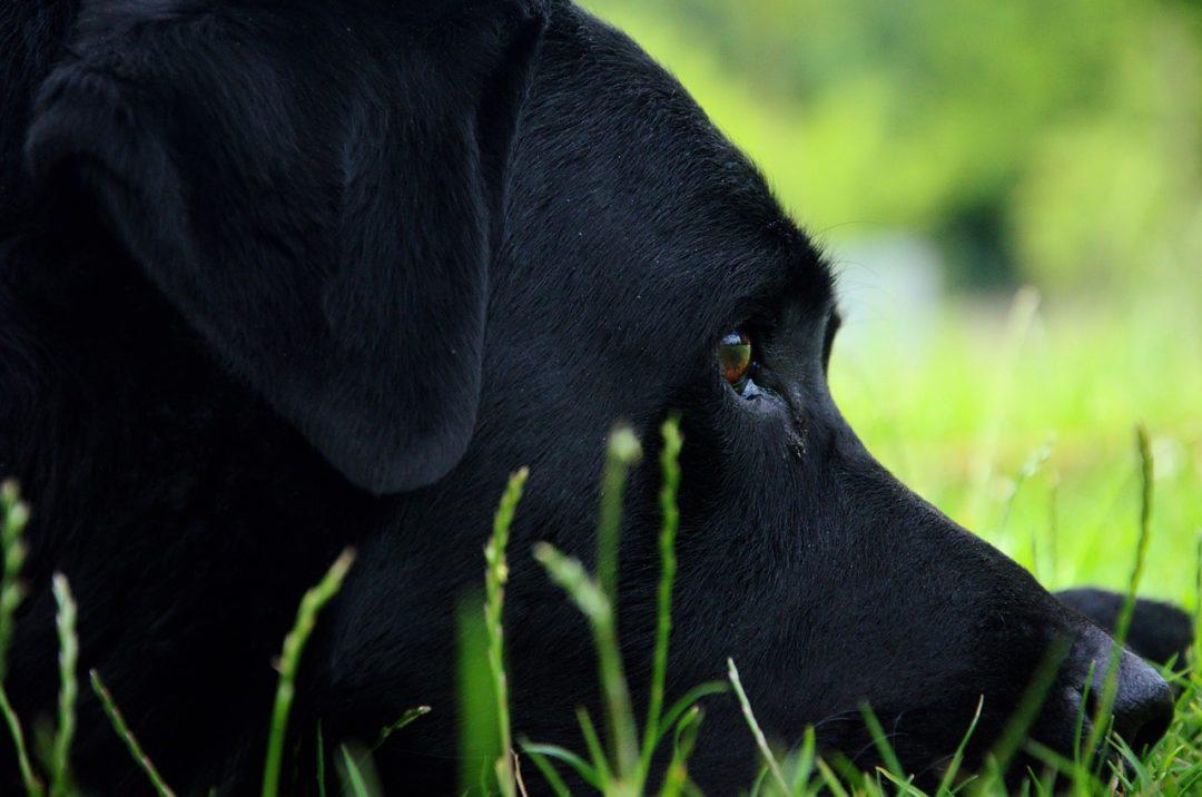 Hund wenn stirbt der Trauersprüche Hund:
